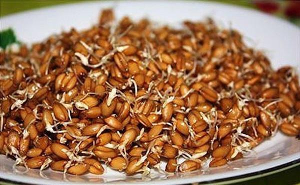 Волшебные проросшие зерна