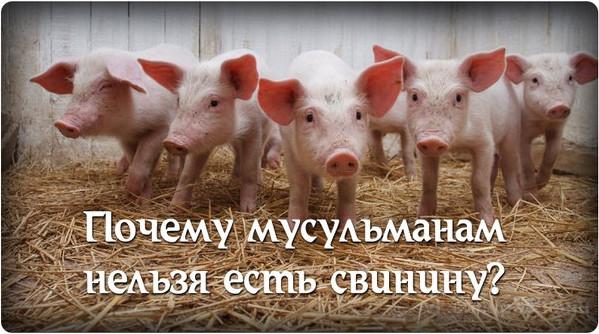 Почему у мусульман свинину нельзя есть