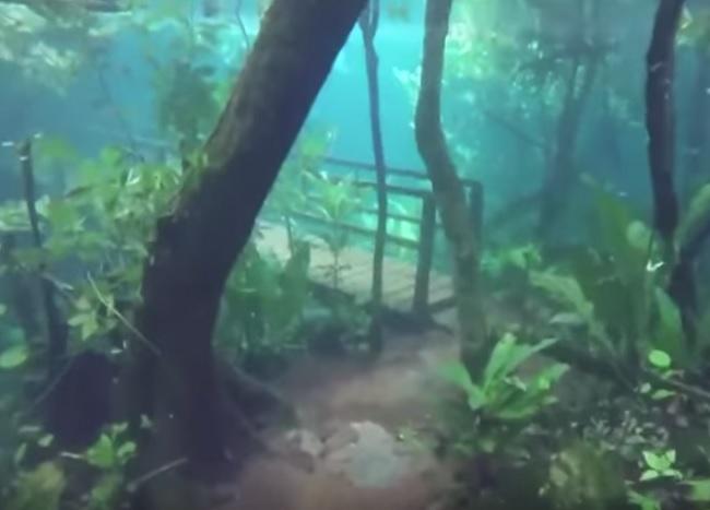 Сказочный ЛЕС под водой